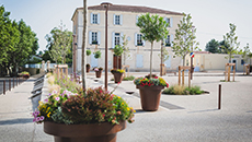 Provence, Mazan