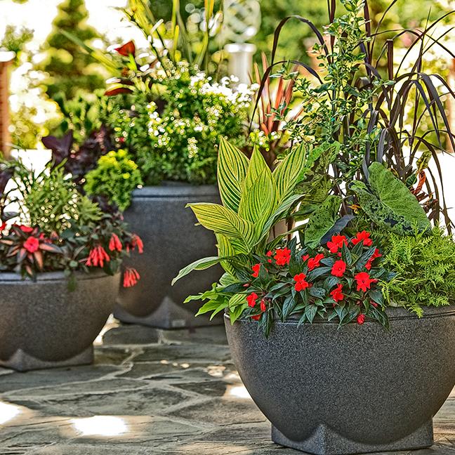 Rosa Planter